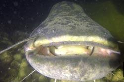 ebro-river-fishing-catfish-camping-portmassaluca