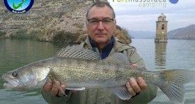 Zander fishing on the ebro river