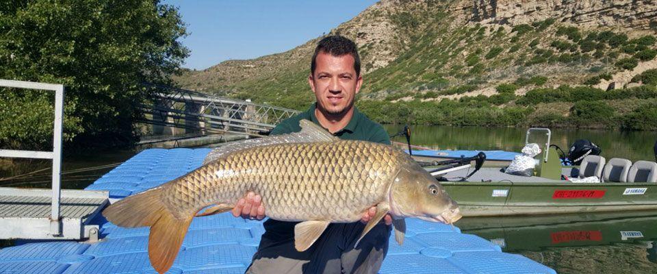 pesca de carpas en el río ebro desde las instalaciones del camping portmassaluca