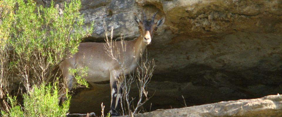 observación de la fauna en las orillas del río ebro